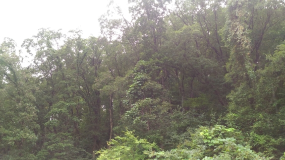 ゼロエミ式きのこ栽培自伐採林業